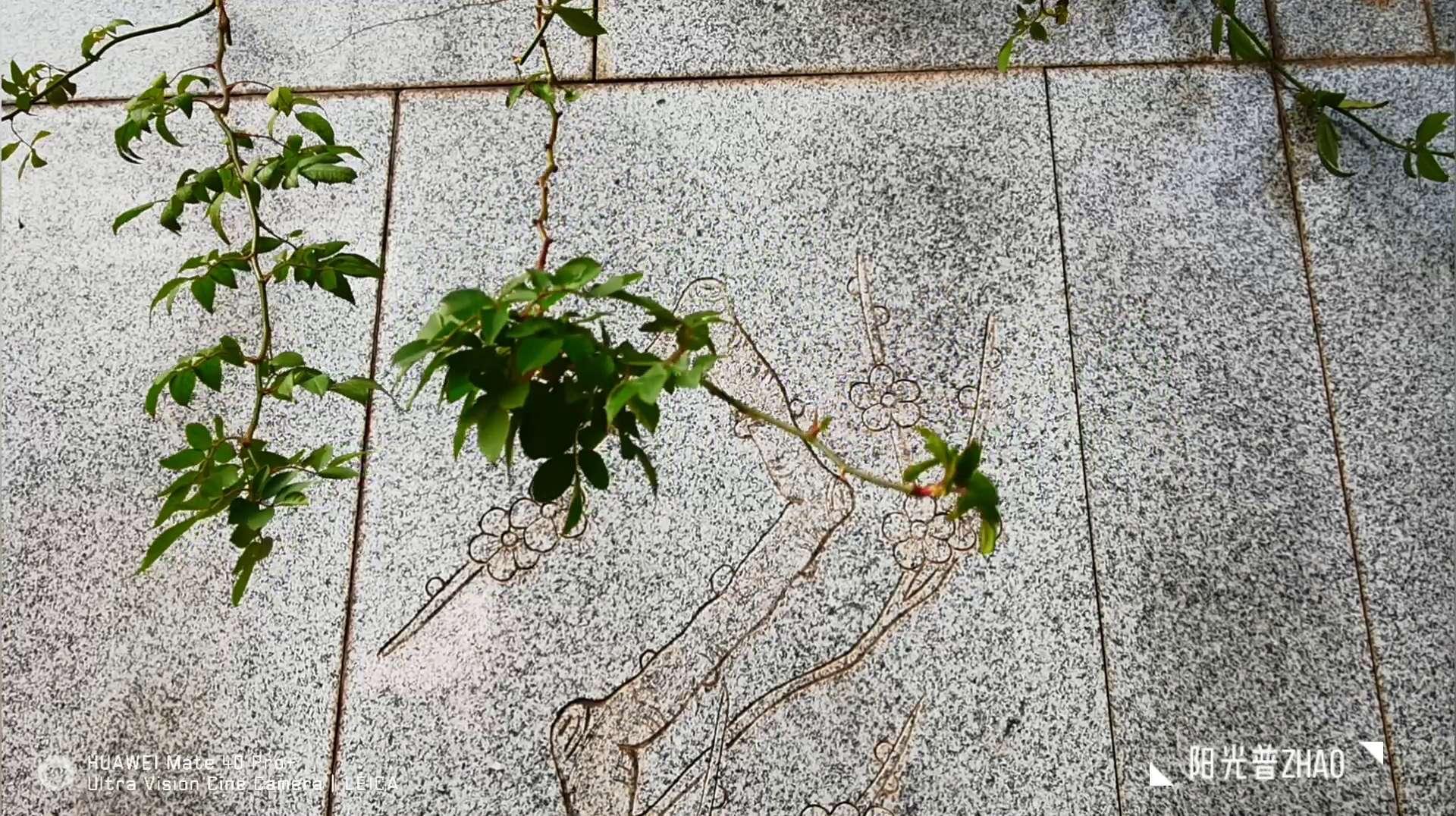 【MATE 40 PRO+】日子,花粉随手拍-花粉俱乐部