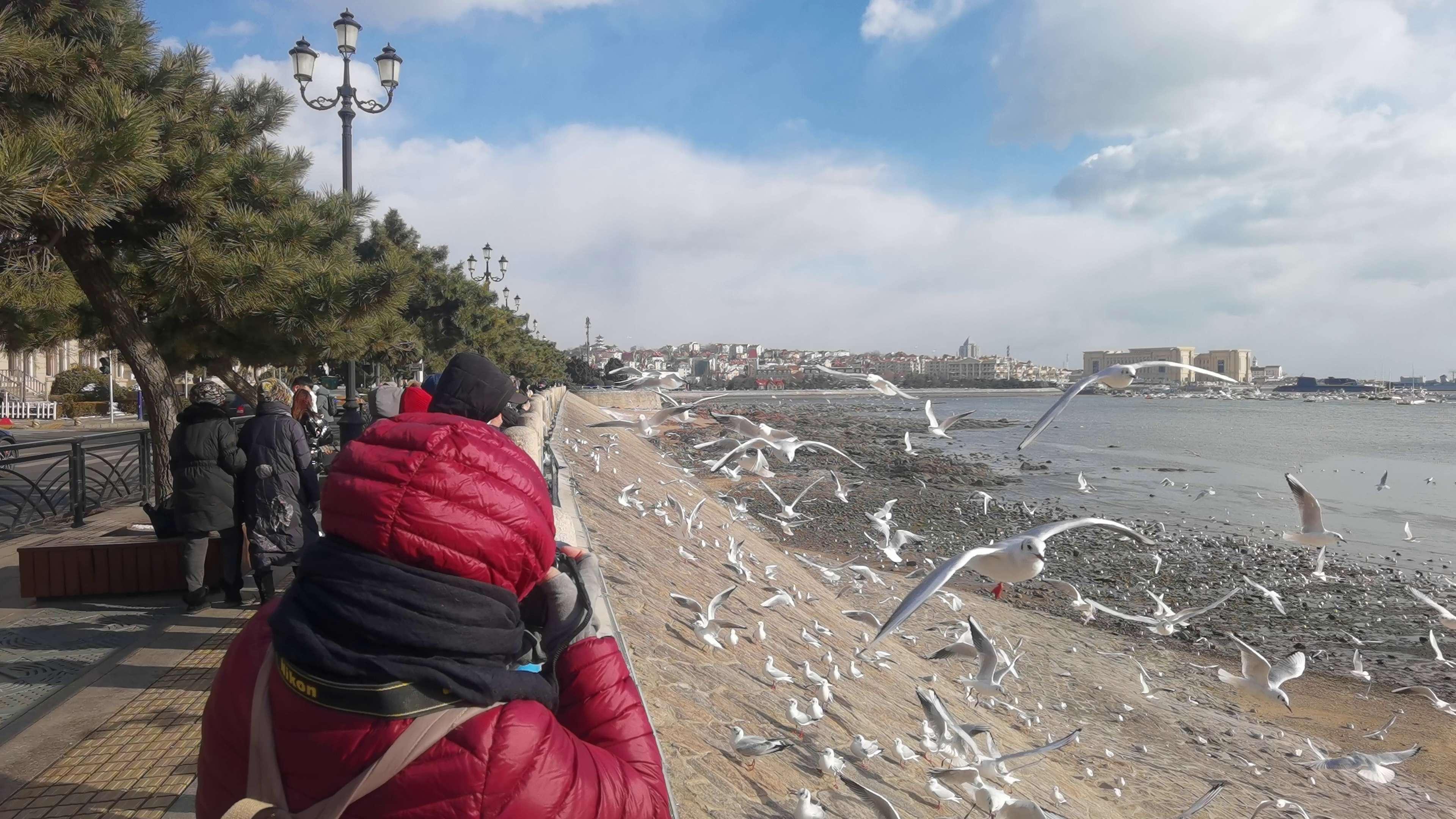 今天在青岛栈桥边拍海鸥,随手拍-花粉俱乐部