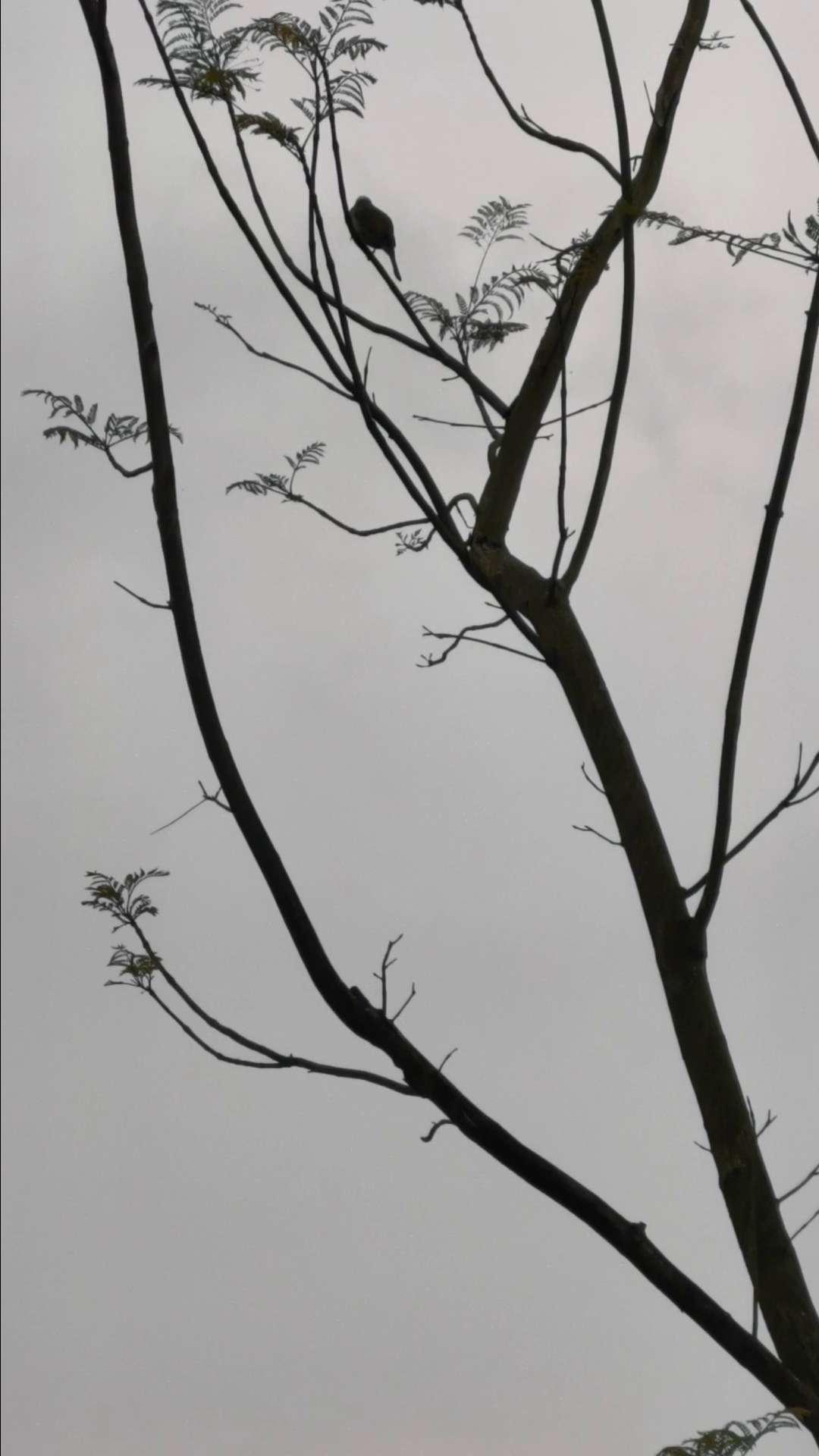 小鸟在树上唱歌,花粉随手拍-花粉俱乐部