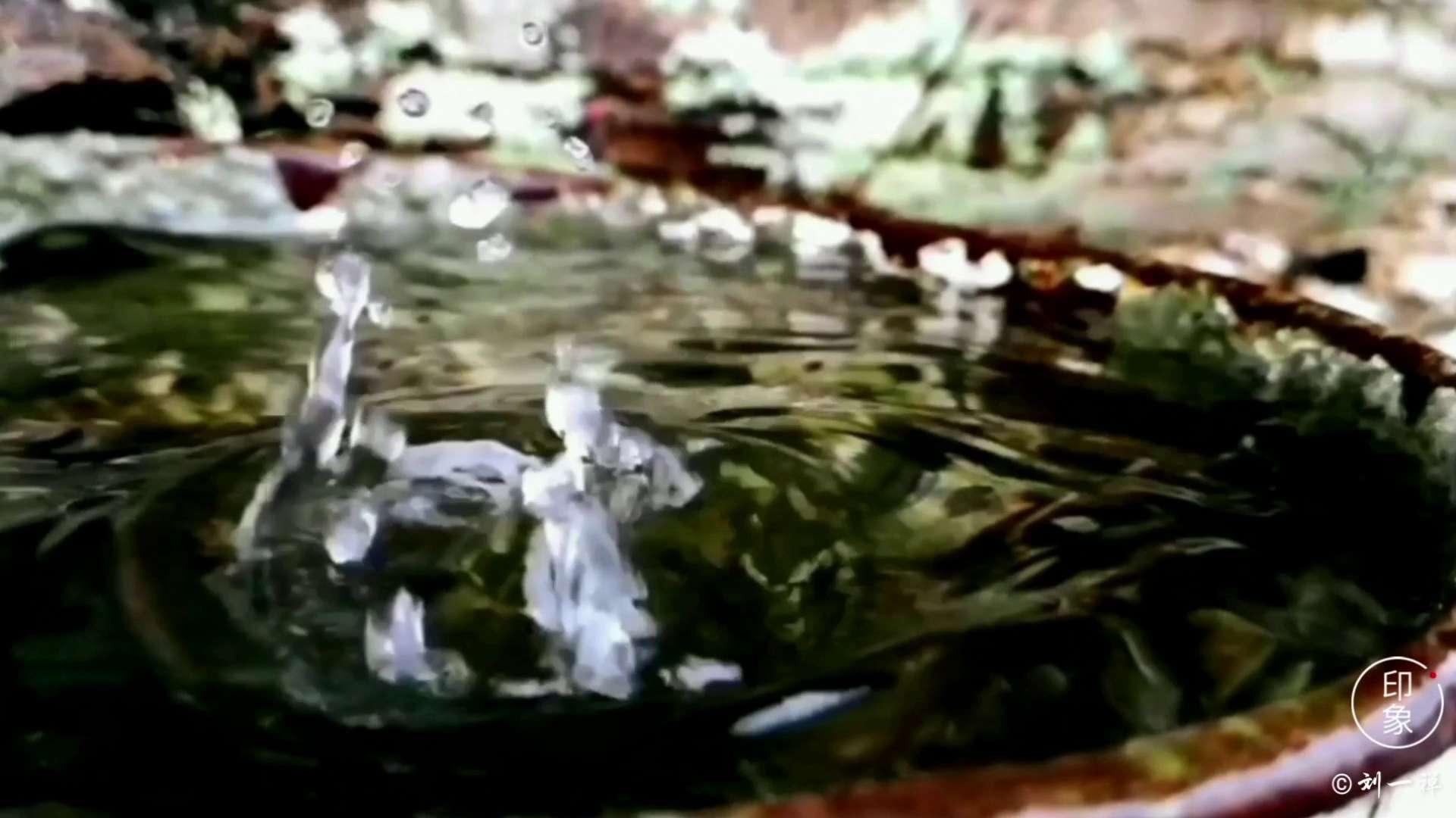 【二十四节气】今日谷雨,花粉随手拍-花粉俱乐部