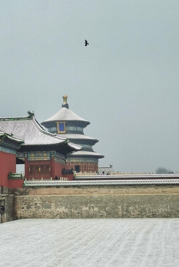 北京天坛公园的冬日,花粉随手拍-花粉俱乐部